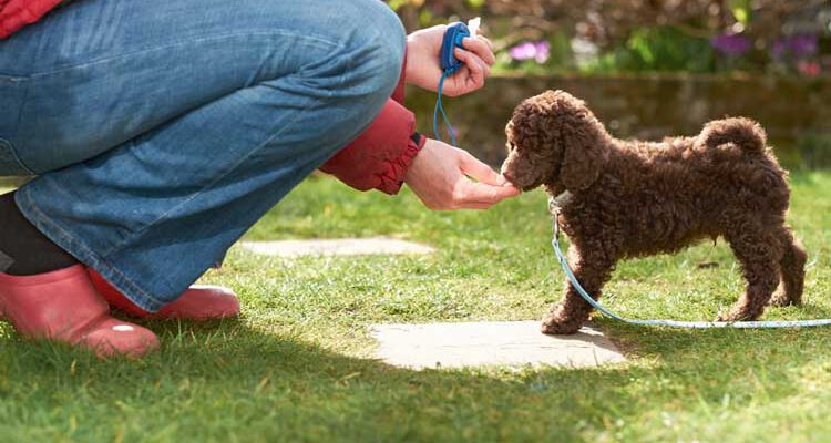 Best-Tips-for-Puppy-Training