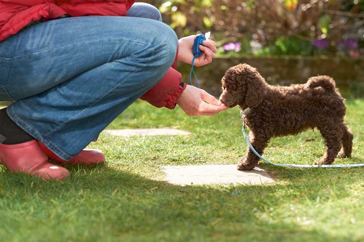 3 Great Tips for Stress-Free Training of a New Puppy