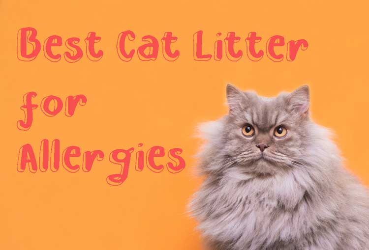 5 Best Cat Litter for Allergies 2021