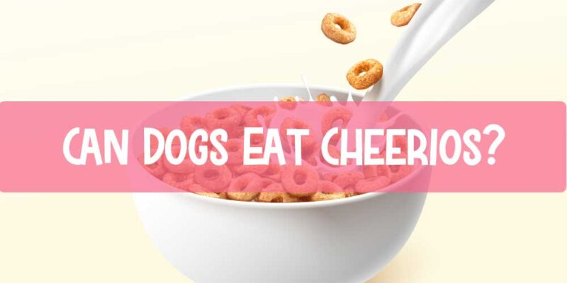 Can-Dogs-Eat-Cheerios