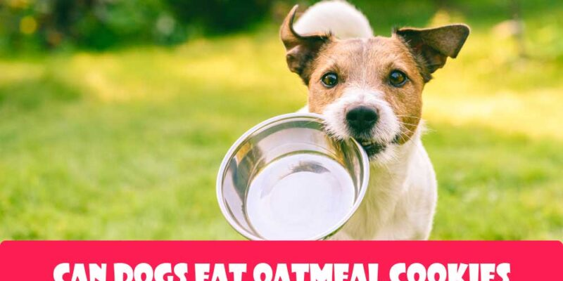 Can-Dogs-Eat-Oatmeal-Cookies