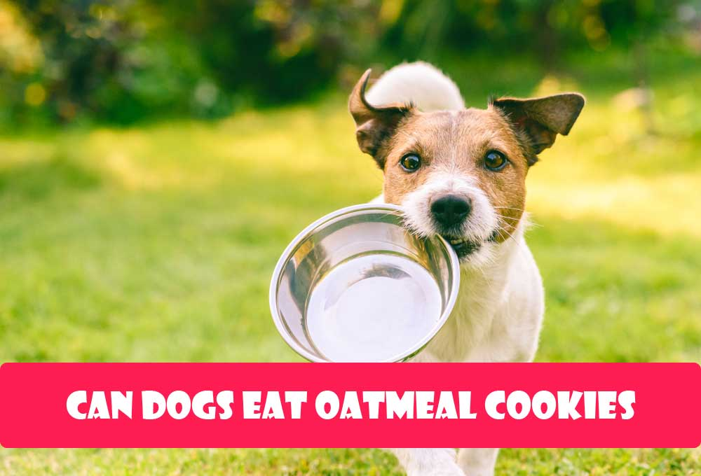 Can Dogs Eat Oatmeal Cookies?