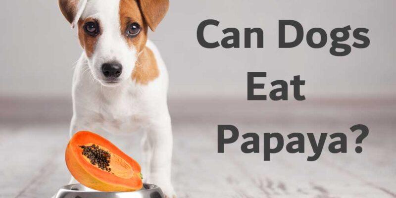 Can-Dogs-Eat-Papaya