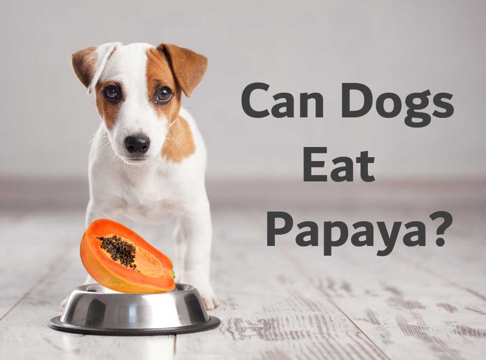 Can Dogs Eat Papaya?