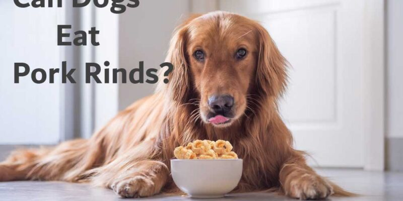 Can-Dogs-Eat-Pork-Rinds