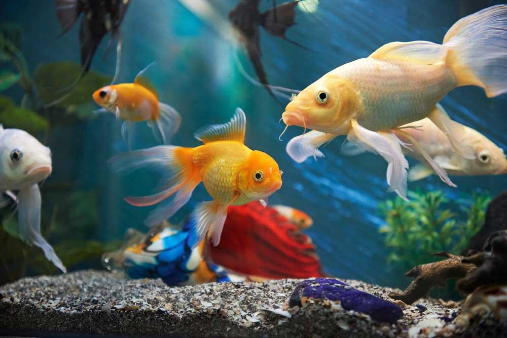 fish-aquarium